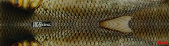 Roach color back